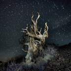 Starry Night, Bristlecone Pine Forest, CA 2013